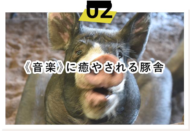 豚舎へのこだわり